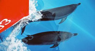 Meine erste Begegnung mit Delfinen…