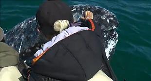 20 Jahre schwimmen mit Delfinen und Walen  – Eine Liebeserklärung