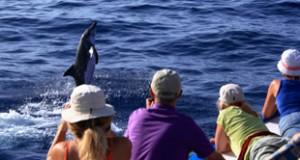 Ozeanische Wochen Klassik