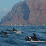 Pilotwalgruppe vor La Gomera