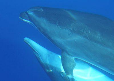 BotschafterIn der Meere werden – engagierter Aktivurlaub auf La Gomera