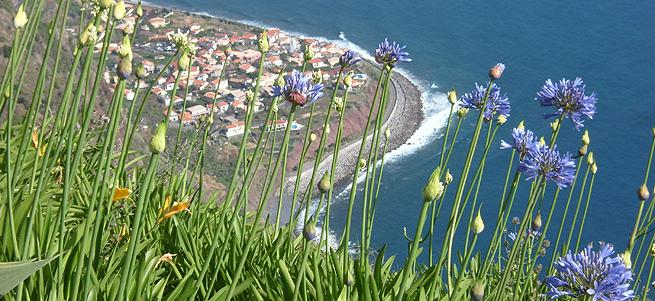 Madeira – Delfine und Meer