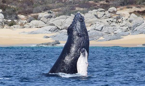Warum entwickeln Wale keine Tumore? – NUR SO EINE IDEE 05/19