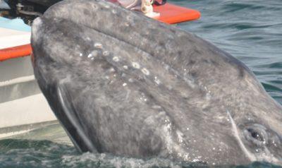 Wale berühren? Wer berührt hier eigentlich wen?