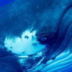Auge eines Buckelwals
