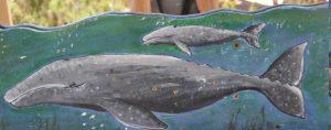 Zeichnung von Grauwal Mutter und Kalb