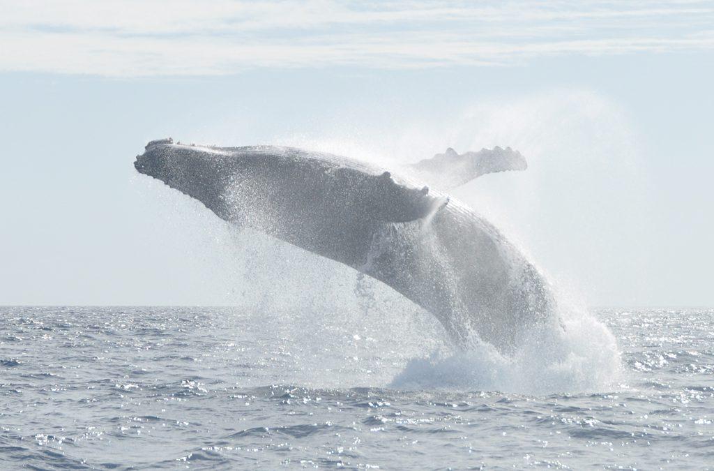 Sind Wale unbezahlbar? – NUR SO EINE IDEE 10/19
